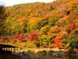 京都紅葉2010 040