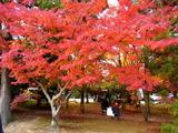 京都紅葉2010 001