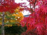 京都紅葉2010 002