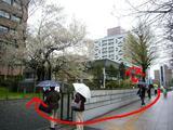 石割桜・バスP