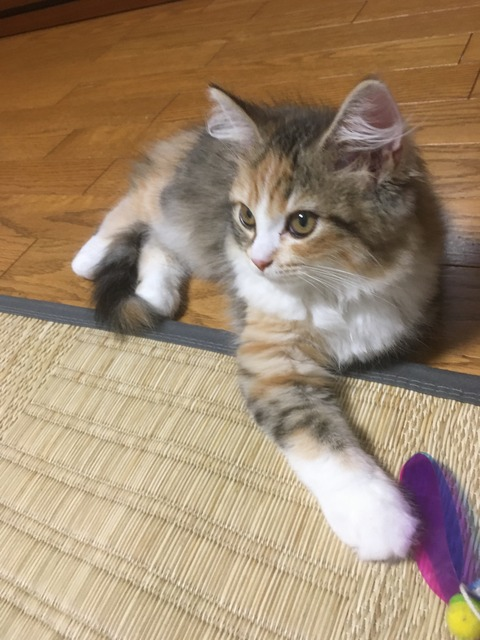 7.27なぎ(猫じゃらし4)