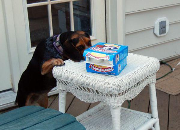 pets_steal_food_640_01