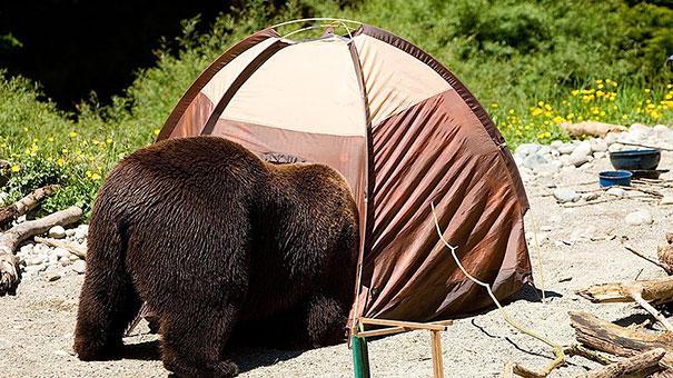 funny-bears-doing-human-things-5