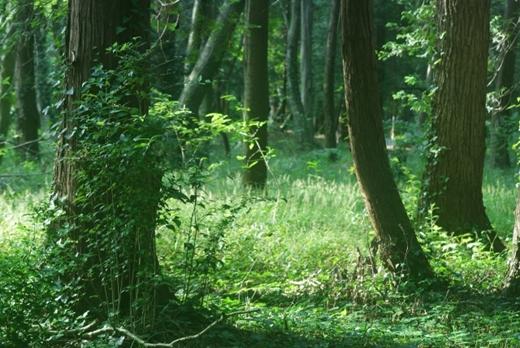 【悲報】人類さん、木を食材にできない