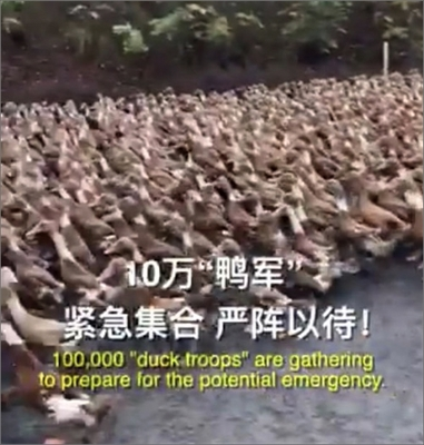 duck-100000-arms