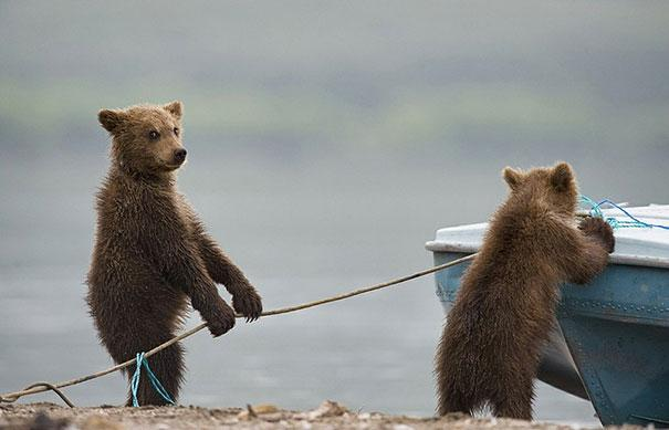 funny-bears-doing-human-things-6