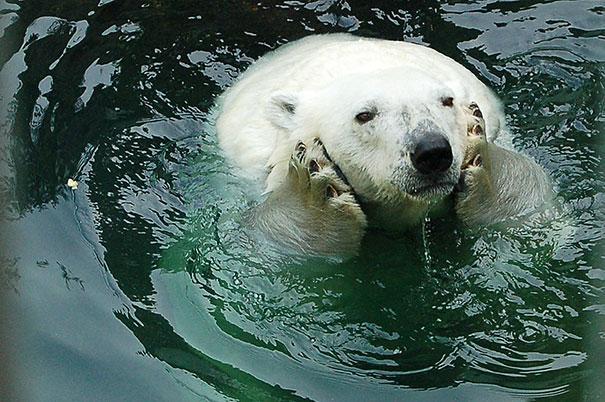 funny-bears-doing-human-things-11
