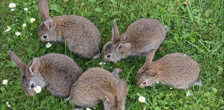 plan-conejo-venezuela