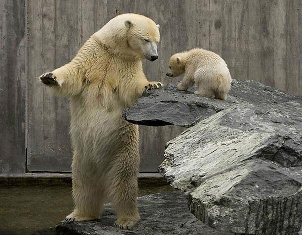 funny-bears-doing-human-things-241