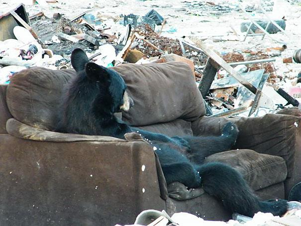 funny-bears-doing-human-things-24
