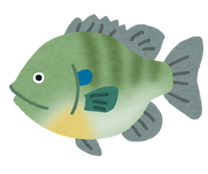 fish_bluegill2