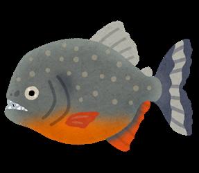 fish_sakana_piranha