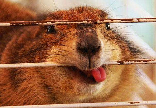 funny-derpy-animals-12