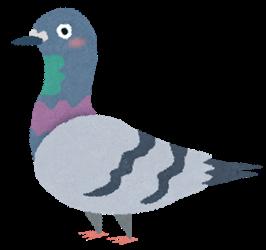 【動画】鳩さん、休憩していた場所がエスカレーターの手すりだと気づく
