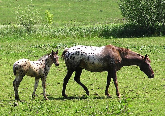 state-animal-baby-17