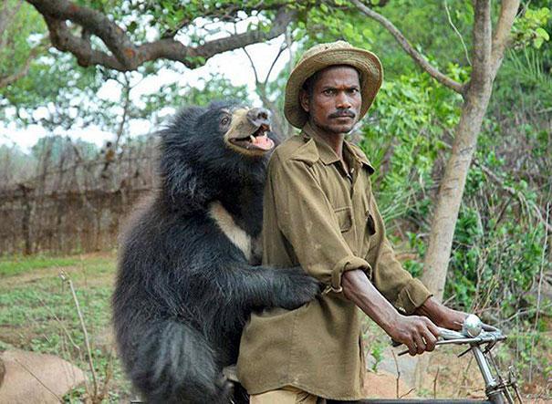 funny-bears-doing-human-things-21