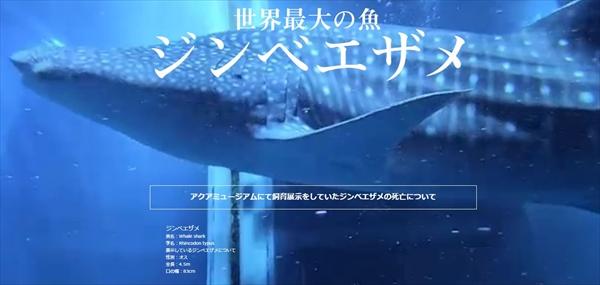 【悲報】八景島シーパラダイスのジンベエザメ、展示から4ヶ月で死亡