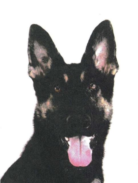行方不明者捜索中の警察犬が逃走。兵庫県警「見つけたら通報して」