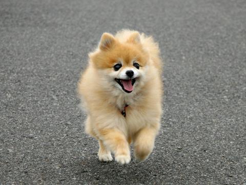 dog289