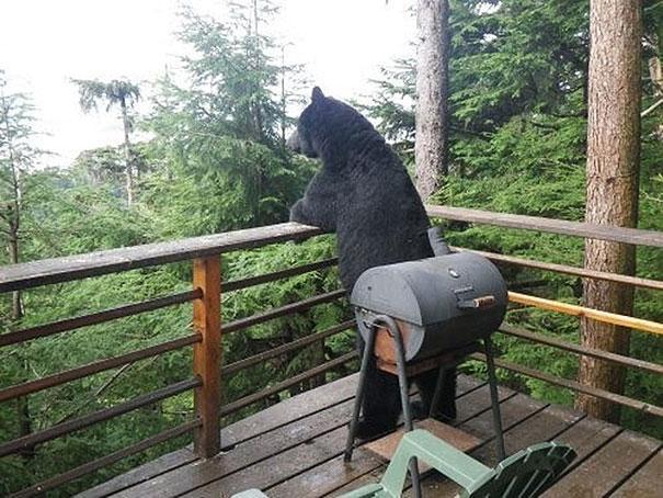 funny-bears-doing-human-things-26
