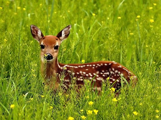 state-animal-baby-48