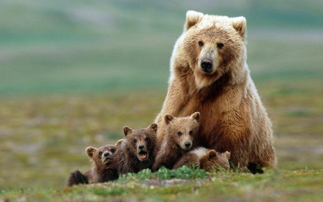 state-animal-baby-18