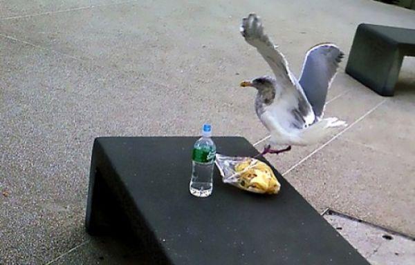 pets_steal_food_640_18