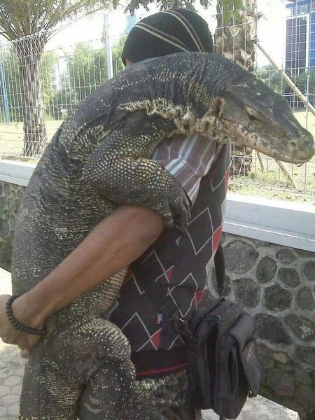 1e77f06c4e384c3b62aa38ce4dc2b734--pet-lizards-large-lizards