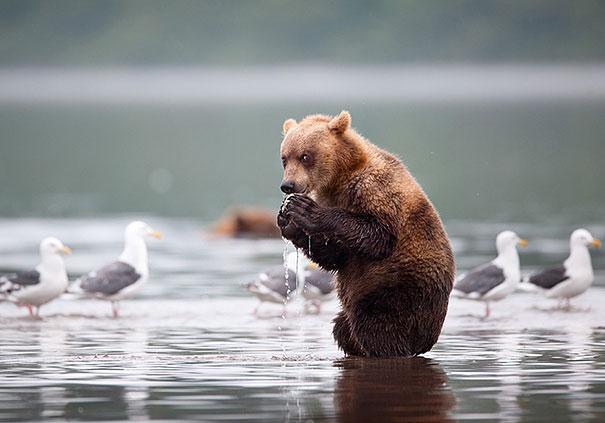 funny-bears-doing-human-things-7
