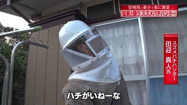 【朗報】蚊、スズメバチ、ゴキブリ、あまりの暑さに死亡
