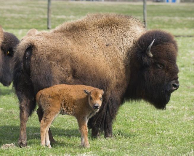 state-animal-baby-1