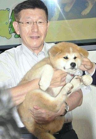 秋田犬の画像 p1_37