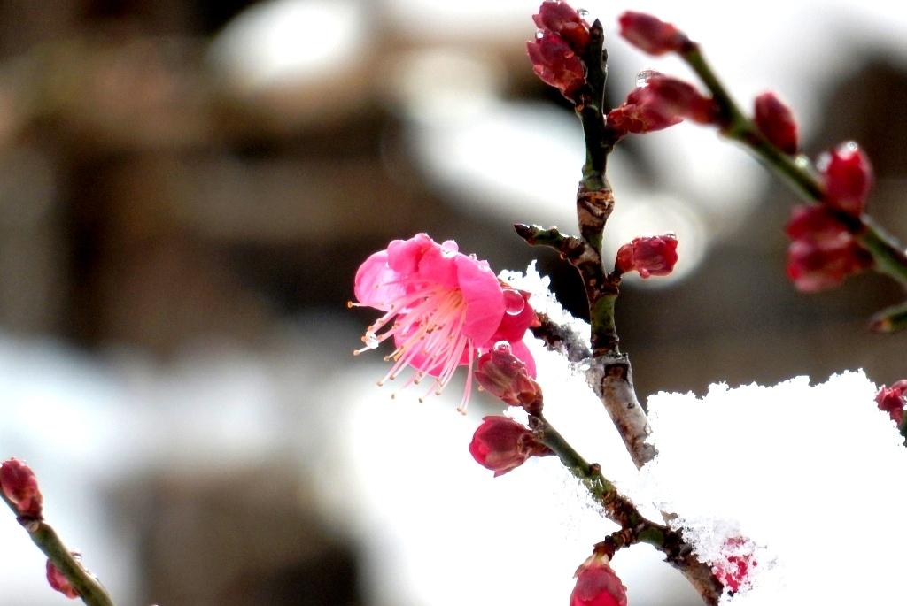 雪京都 598