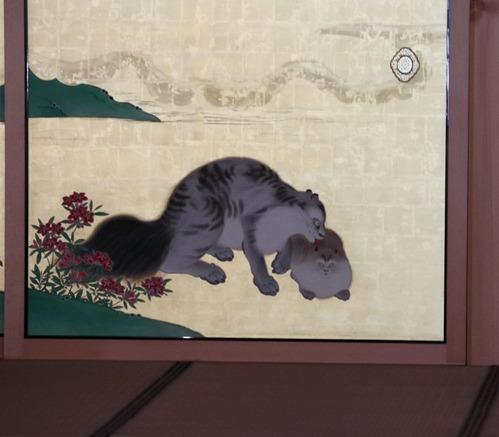IMG_7812麝香猫s