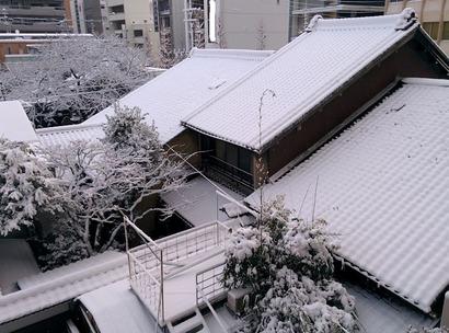 市内の樹氷