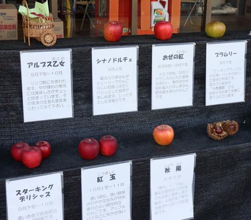 IMG_5787小布施のリンゴ02m