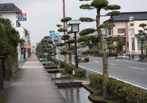 マキの街路樹