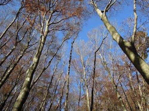0041樹林01