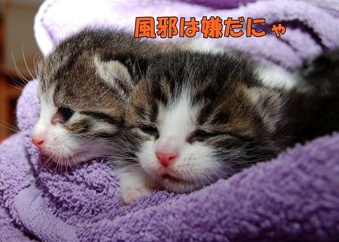 cat-205757_1920