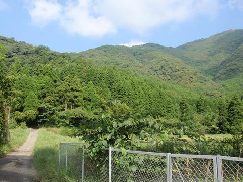 津島畑山 (2)