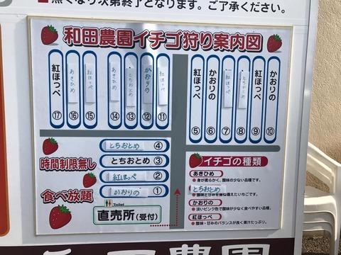 170320_和田農園_5