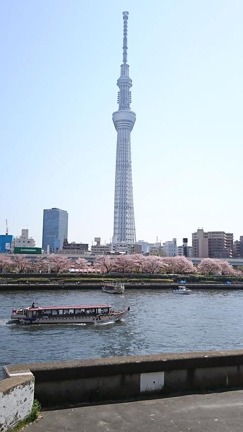 隅田公園花見:⑦スカイツリーと向島側桜180331
