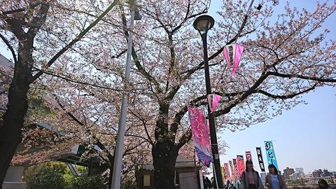 隅田公園花見:⑥花見をしながら180331