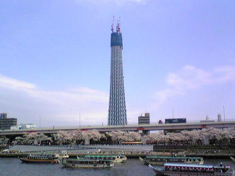 100403満開の隅田公園の桜と東京タワーの高さと超えたスカイツリー①