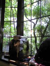 カフェ雲水:店�窓外の緑が美しい090429.jpg