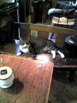 乱歩:店�店の猫070909.jpg