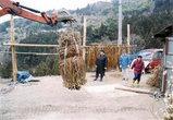 大豊町東豊永でいまでも三椏を栽培している農家がおる