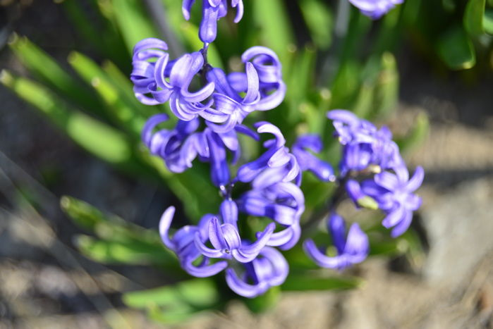 津軽の春11