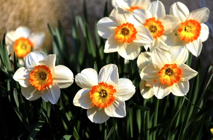 津軽の春9