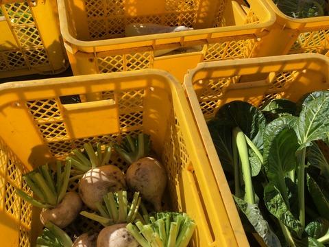 野菜収穫3